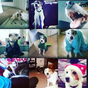 In praise of dogs (ariposte)